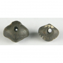 A fine pair of ancient Central Asian fossilised shell beads